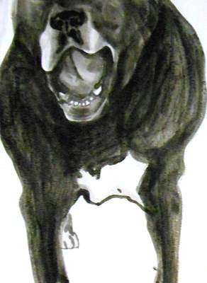 Doug speaks 1, Dog Studies, high contrast black acrylic painting, Elizabeth Lisa Petrulis