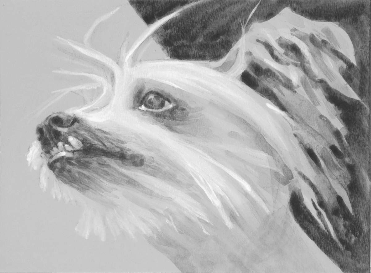 intimate portrait of a Chinese Crested Dog, emphasizing the long fur on his face and ear, and his snaggle tooth. black and white acrylic painting by Elizabeth Lisa Petrulis
