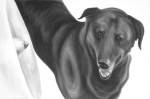 Dog with floppy ears and a loose scruff looks sideways at an others noes protruding from a medical collar. High contrast black and white painting by Elizabeth Petrulis