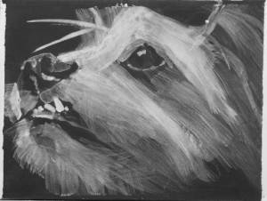 Intimate dog portrait, high contrast acrylic sketch by Elizabeth Petrulis