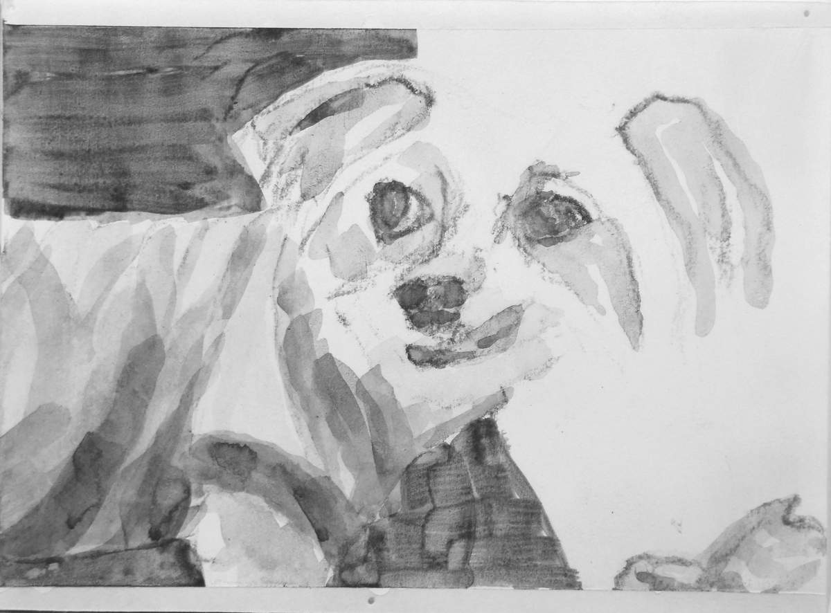 dog portrait with turtle, high contrast acrylic painting/drawing by Elizabeth Lisa Petrulis