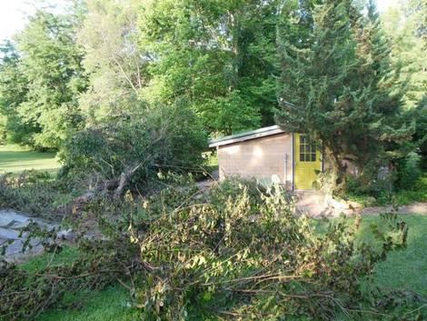 fallen tree, art studio, newly painted green door