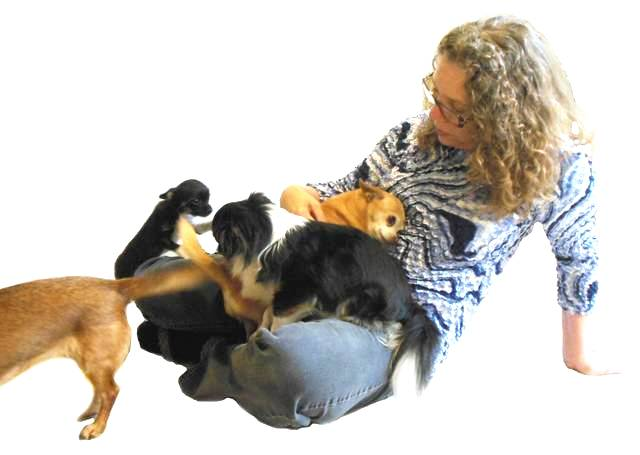 artist enjoyingbeing crawled over and cuddled by several Chihuahua dogs