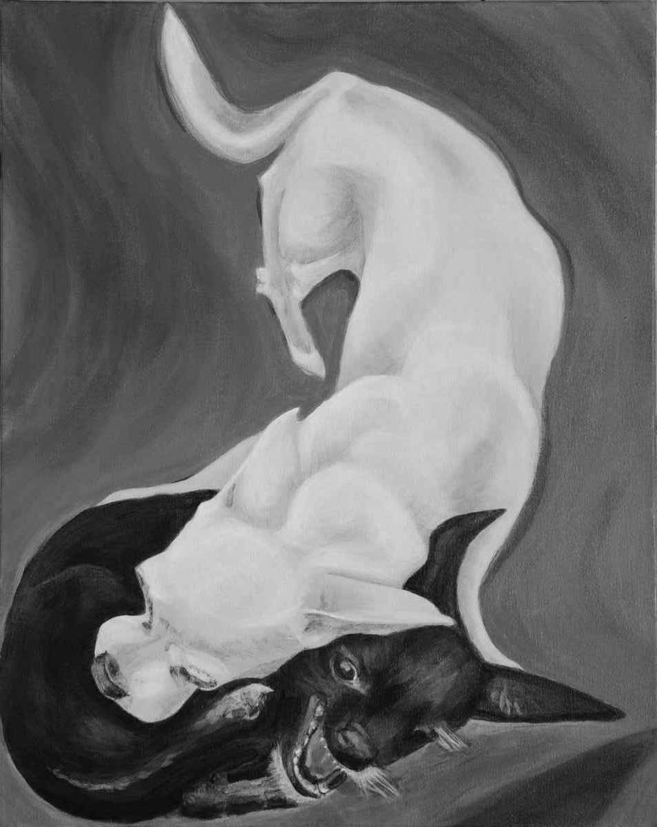 Two wrestling chihuahua dogs painted in classic black and white acrylic. On a gray toned background one white chihuahua spans the canvas from top to bottom as the other black chihuahua curls in a defensive ball under the neck of the white dog.