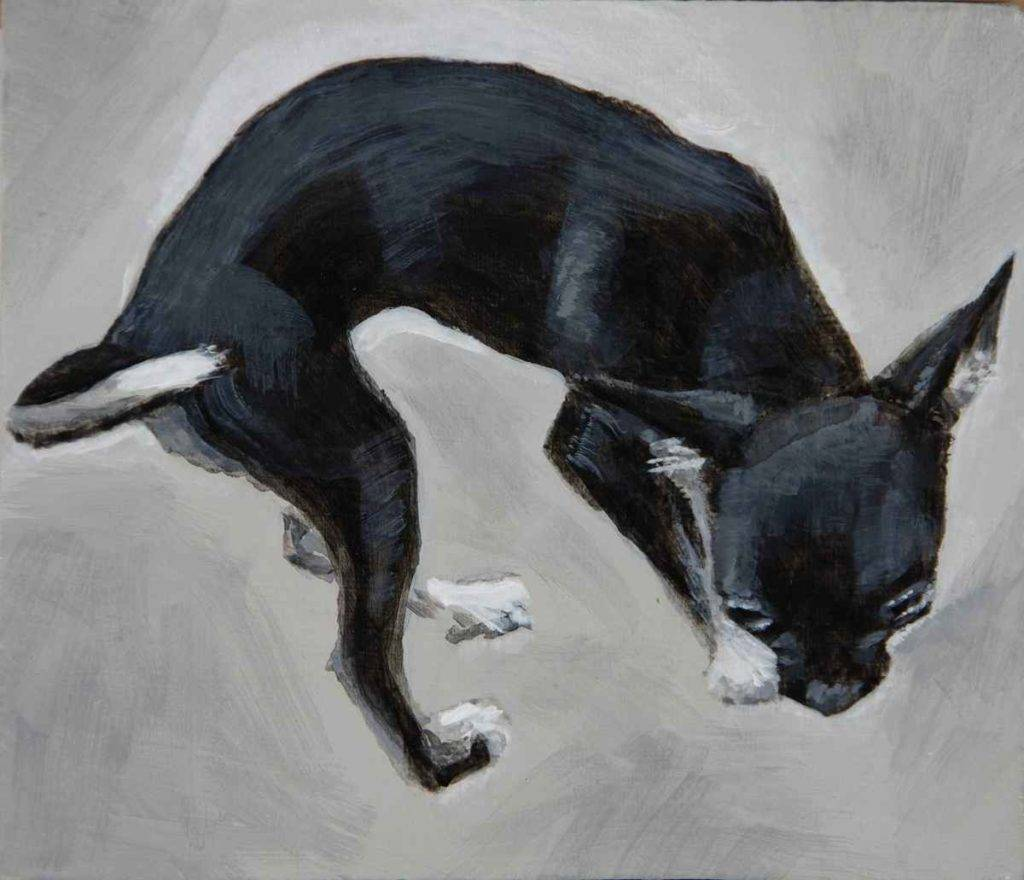 Black and white full body portrait of a tiny chihuahua by Elizabeth Lisa Petrulis. Tenderly seen from above it shows her delicately curved torso and tail as she sniffs the ground with big eyes.