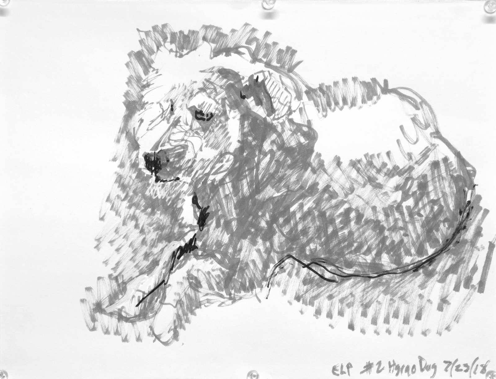 Felt tip pen drawing of a recumbent fluffy white dog. Grey with white and black accents. Artist Elizabeth Lisa Petrulis.