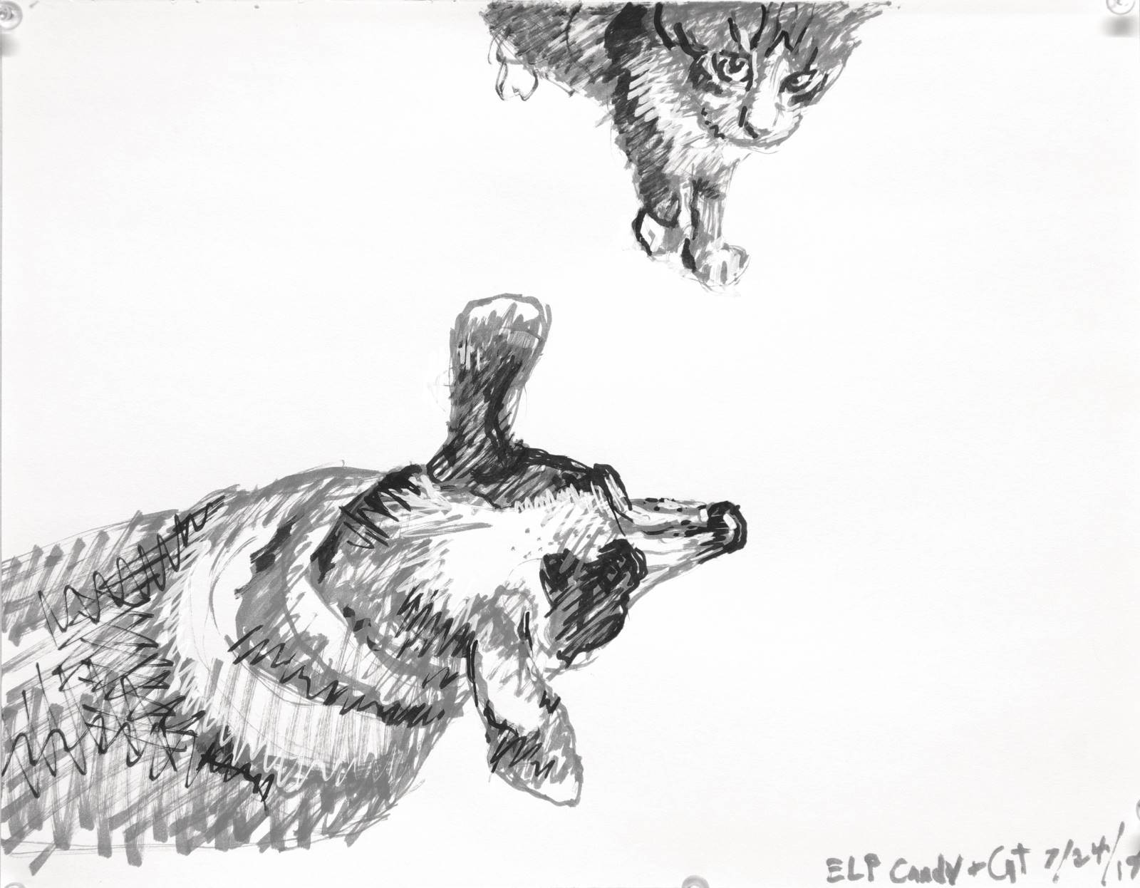 Rat terrier dog seen from above ears straight out to sides nose forward. And her kitty friend walking into the scene looks up at the viewer. A black, white and grey felt tip paint pen drawing by Elizabeth Lisa Petrulis.