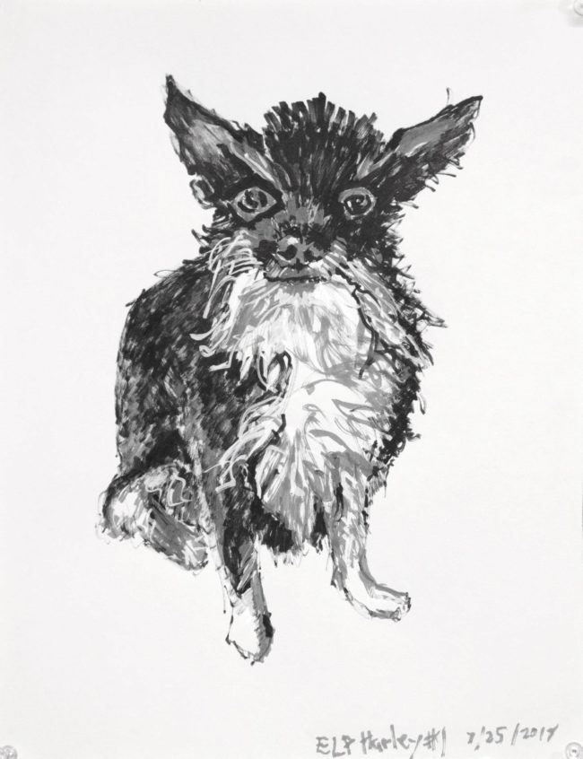 Felt tip pen drawing of a scruffy bearded chihuahua dog. Seated and sporting tuxedo markings. Artist Elizabeth Lisa Petrulis.