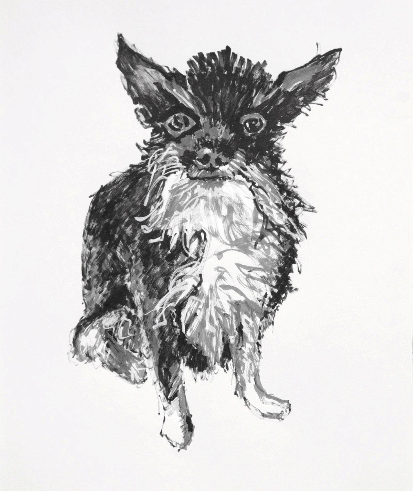 Harley 1, 2018, acrylic paint pens on paper, Elizabeth Lisa Petrulis. Portrait drawing of a scruffy bearded chihuahua with tuxedo markings.