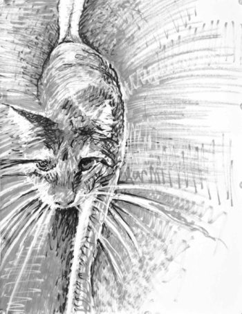 Felt tip drawing of a cat stepping forward with prominent whiskers and back ground radiating from the cat. Artist Elizabeth Lisa Petrulis.