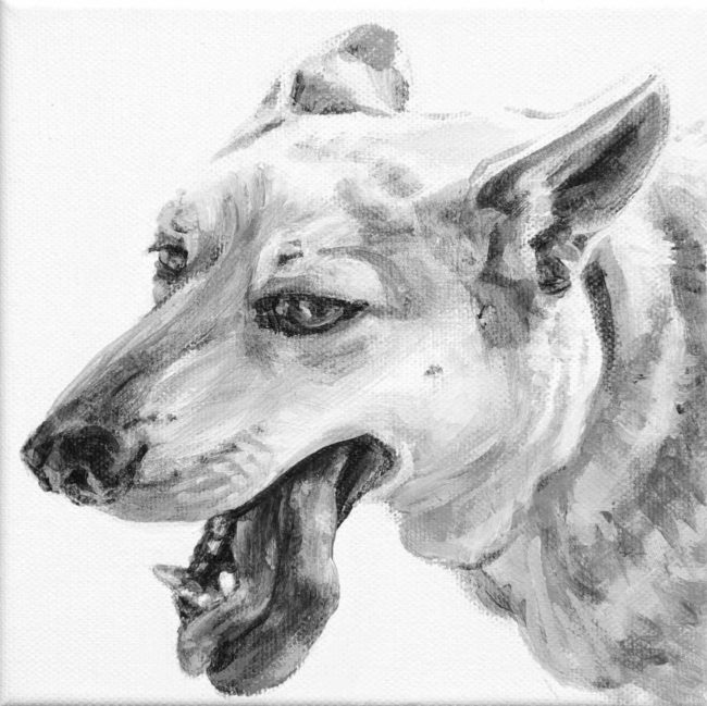 Dino's tongue hangs to the side of his canine teeth in this head portrait of a white German Shepherd type mutt. Painted in black and white by Elizabeth Lisa Petrulis.
