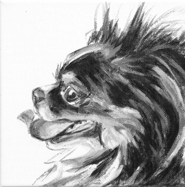 Faygen's tongue curves up toward his nose in this portrait of a long haired Chihuahua by Elizabeth Lisa Petrulis.