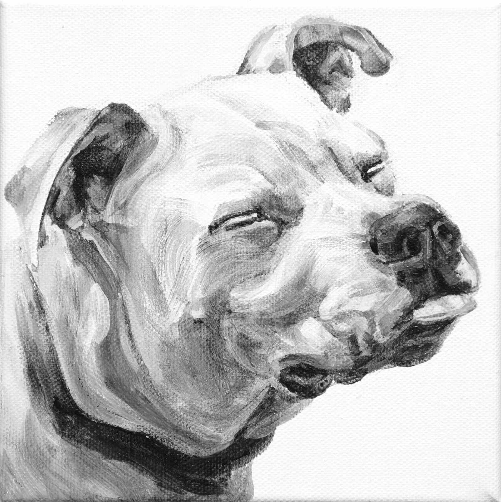 Leroy's tongue appears to be waiting for a snow drop. A closed eyes portrait of an American Pit Bull in black and white by Elizabeth Lisa Petrulis.