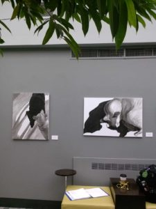 black and white paintings of dogs and cat by Elizabeth Lisa Petrulis installed on a grey wall
