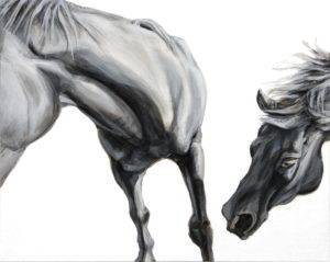 close up and croped view of two horses leaning to the left, one upper front legs, chest, and jaw, the other only its head reaching toward the first as if ready to nibble