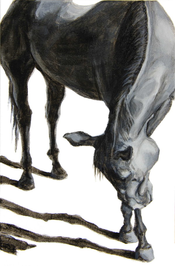 graceful front view of a horse bowing forward over crossed front legs with sharp afternoon shadows branching from the hooves