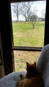 Studio cat Boo, in shadow, viewing the green pastoral southern scene framed from the front window of the studio.