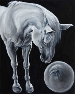 Horse bows down to gaze in a ball, white horse on back ground with strong lighting from above.