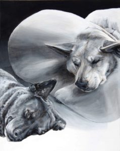 Two sleeping dog heads on an hombre background light to dark. Dark dog at the bottom with the light dog above who sleeps in a medical collar which catches the light and diffuses his paws which point toward his sleeping companion.