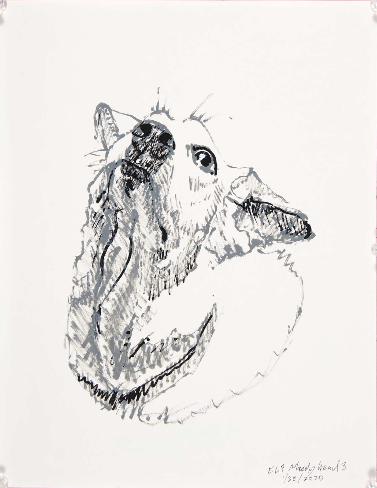 dog drawing portrait neck and head nose in air