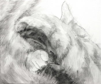 Sleeping cat's face is seen in the shadow made as she covers her head with her paw. An ear, a paw, a noes become decipherable from the blurr of soft fur. A black and white acrylic painting by Elizabeth Lisa Petrulis.