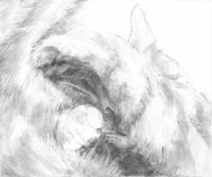 """Boo Pica, 2015, Dog Studies, Cat Series, acrylic on canvas, 10"""" x 12"""""""