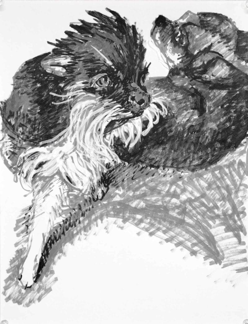 A felt tip pen drawing of two chihuahuas. A scruffy tuxedo, bearded, chihuahua steps forward as a short haired recumbent dog looks over his shoulder from behind. Artist Elizabeth Lisa Petrulis.